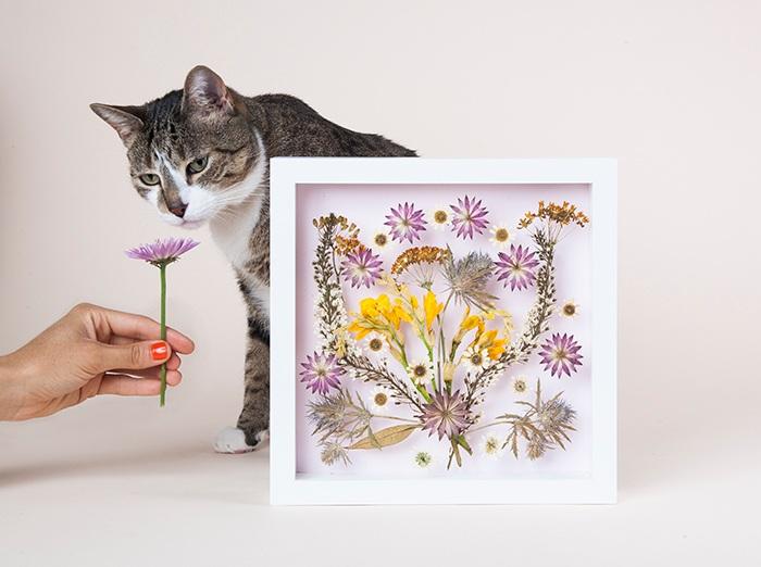 Картина из сухих цветов и котенок